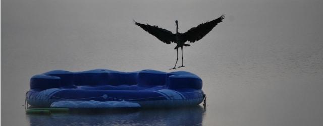 Heron landing small